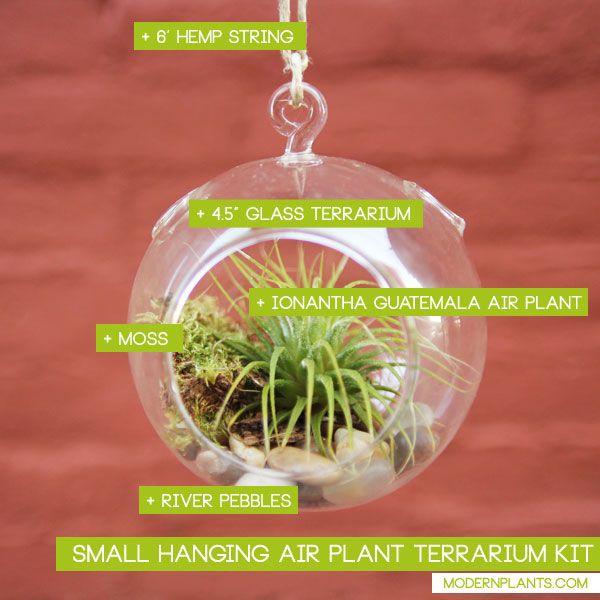 plants for small terrariums | plant terrarium kit includes 4 5 glass air plant terrarium river ...