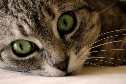 Look at those green eyes!  From Inspiration Lane.