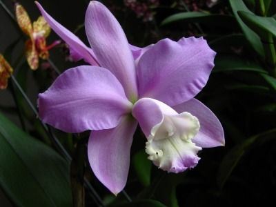 Different Types of Orchids, Orchid Types and Species, Orchid Varieties