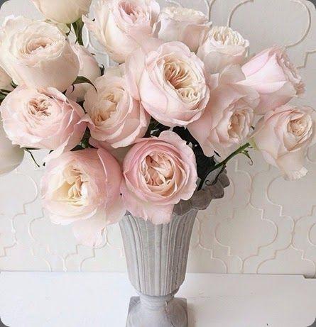 variety 'Keira' David Austin rose tulip lesley 1094933_10152259536119144_795390168_n