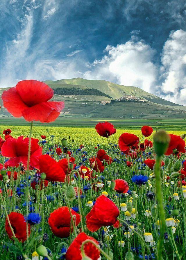 Landscape Photography House Landscapephotographytips In 2020 Beautiful Flowers Beautiful Nature Nature Photography