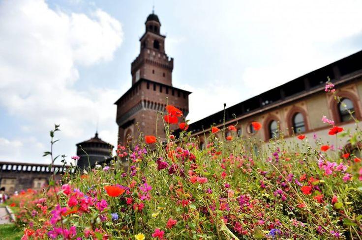 Milano, l'incanto del giardino fiorito nel Castello Sforzesco