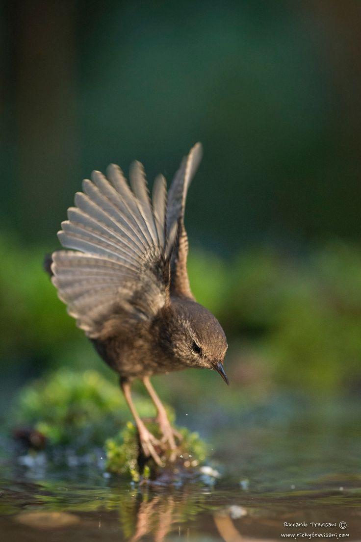 little wings - null