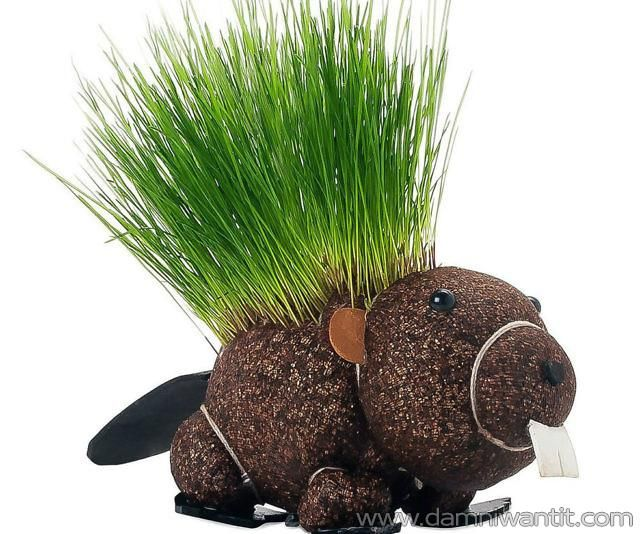 If you are bored with regular planters, here's a fun alternative… this beaver shaped planter is part of a kit which also contains ryegrass seeds and a water bowl will bring a new touch to your home and decor. A bald creature at first, but it will steadily start growing grass on it's back. just don't forget to take care of it once in a while and give it a nice trim.