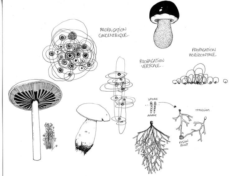 Research on Mushroom organisms ( A5 format )