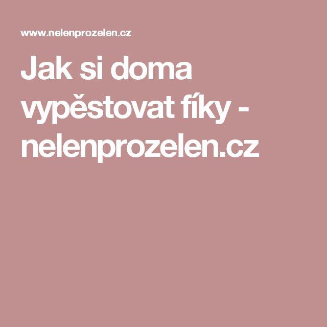 Jak si doma vypěstovat fíky - nelenprozelen.cz