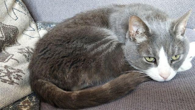 madmumof7: I Wish I Was A Cat....#mysundayphoto