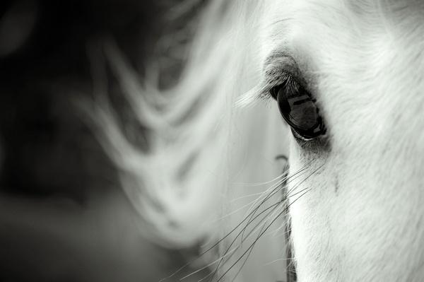 Animalia by Nina Lindfors, via Behance