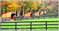 Pasture - run in sheds for each. Add additional roofing off the back for hay/grain storage at each shed. Put next to each so that its one building, and add a solid divider down the center,