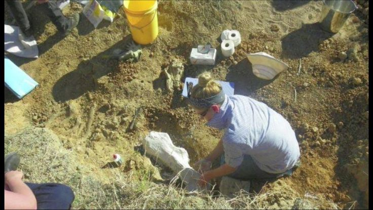 ABC Splash - Digging for Diprotodons in your own backyard! (A Queensland Farm)