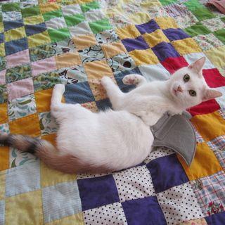 shark week cat costume