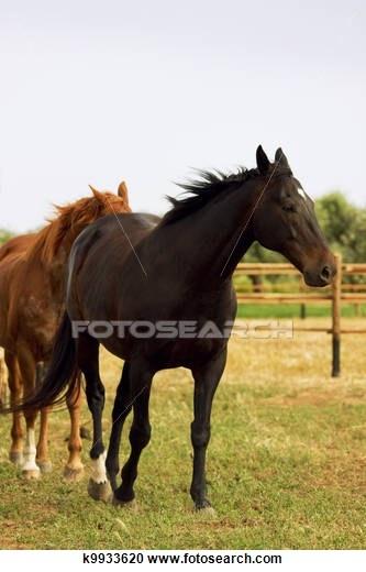 horses in Maremma, Tuscany