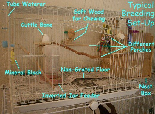 Break Down of a Budgie Parakeet Breeding Cage
