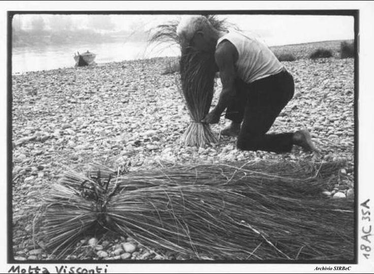 Raccolta di saggina in fascine sulle sponde del Fiume Ticino, Motta Visconti 1969. Archivio SIRBeC. #Lavoro pic.twitter.com/r9AD3IekP0