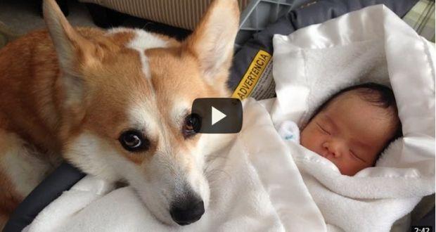 Σκυλιά προστατεύουν μωρά-απίστευτο βίντεο   Kastoras