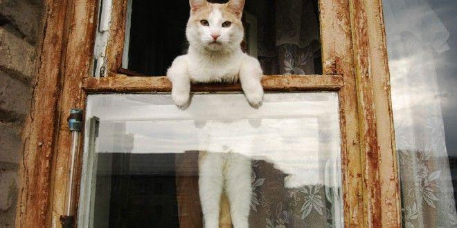 Kedilerin En Komik Halleri | Kedi Maması, Köpek Maması, Fiyatları, Köpek, Kedi, Akvaryum, Kuş Haberleri