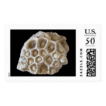 Fossilized Coral Photo on Black v2 Postage - photography gifts diy custom unique special