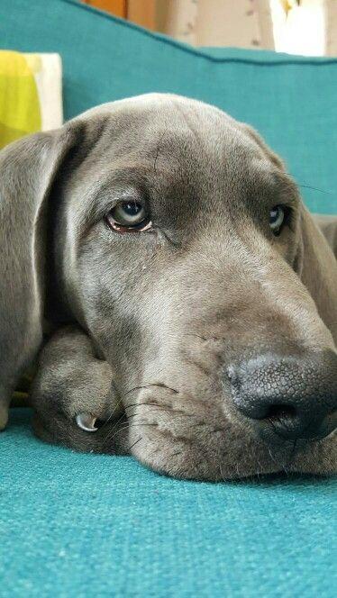 Adorable hound