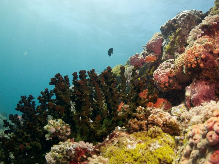 Scuba diving in Anilao, Philippines