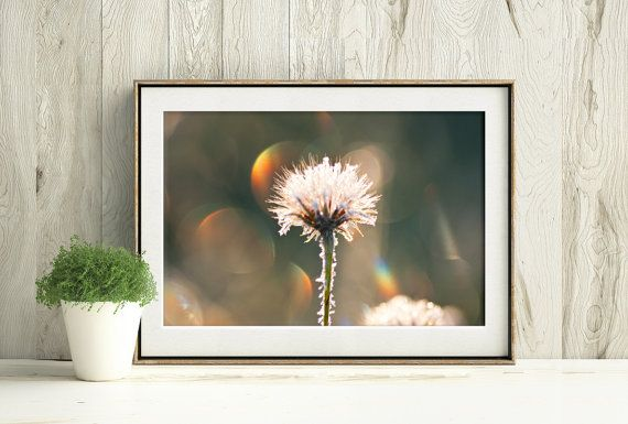 Printable Dandelion Photograph, Dandelion covered in frost on a late autumn morning by PlayfulPixieStudio #dandelion #printablephotograph #frostcovered #wallart