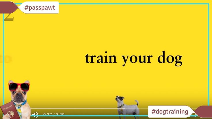 Dog Training Videos  Dog Training Videos  Dog Training Made Easy: How to Train  Dog Training Made Easy: How to Train  Dog Training Made Easy with Dogs Trust is the fun enjoyable but most importantly positive way to train your dog. Positive training is all about rewarding your dog when he does things right.  I dont think this is some sort of cop out. Positive doesnt mean permissive. You can create all the same boundaries all the same ground rules for your dog using positive training methods…