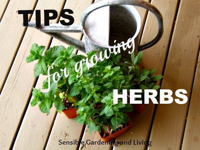 Tips for Growing Herbs with Sensible Gardening and Living