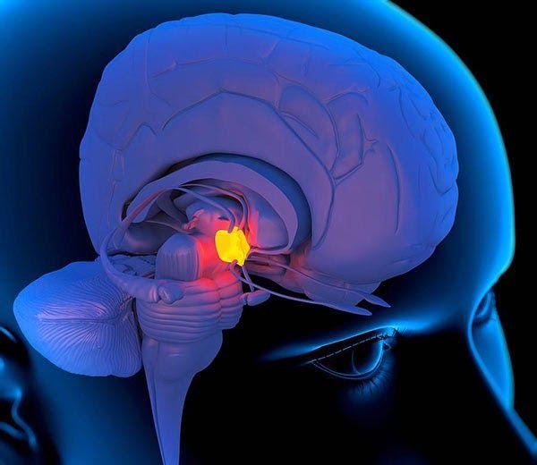 ¡Estos son los ejercicios de la glándula pineal que debes hacer para activarla! ¿Has escuchado alguna vez sobre cuales son ...