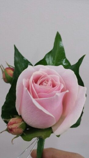 Pink rose and bud buttonhole