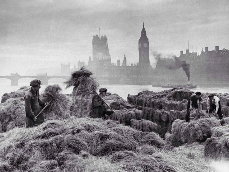 A rural scene in central #London. Men unloading esparto grass on the Thames using pitchforks in 1938. The grass was used to make banknotes.