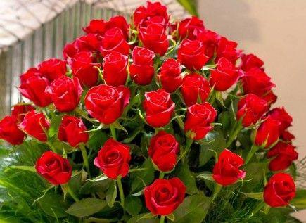 https://500px.com/flowerscoupons/about  Flowers.Com Promotion Code  Discount Flowers,Flowers.Com Coupon,Flower Coupons,Flowers.Com Coupon Code,Flower Deals,Flowers.Com Coupon Code,Affordable Flowers,Inexpensive Flowers,Discount Flower Delivery,Flowers Coupon,Flower Delivery Coupons,Flowers.Com Coupons,Affordable Flower Delivery,Inexpensive Flower Delivery,Flower Coupon Codes,Flower Delivery Express Coupon