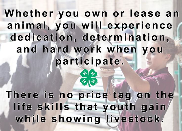 """""""There is no price tag on the life skills that youth gain while showing livestock."""" Minnesota 4-H: http://shout.lt/bqfqr"""