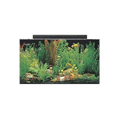 8 best fish tanks images on pinterest fish aquariums for Best freshwater aquarium fish combination