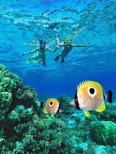 best snorkeling in kauai   Best Beaches to Snorkel in Kauai ♠ re-pinned by  http://www.waterfront-properties.com/jupiteradmiralscove.php