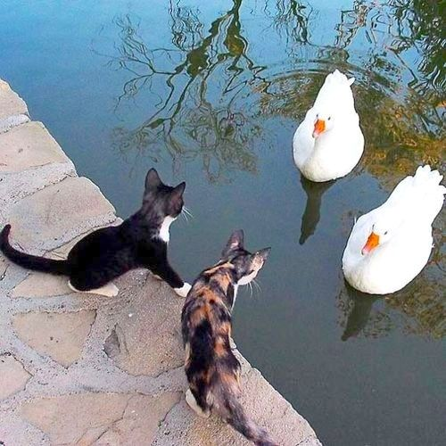 All aboard! Kitty water rides.