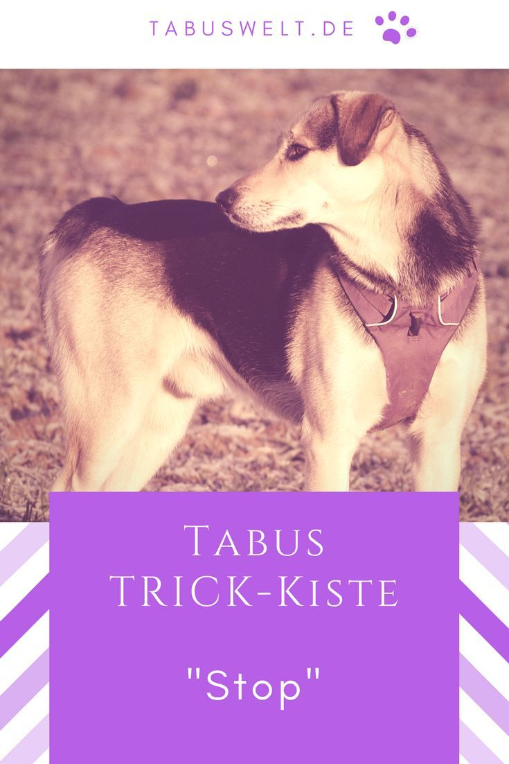 Tabus Trick Kiste Stop Dogs Animals Husky