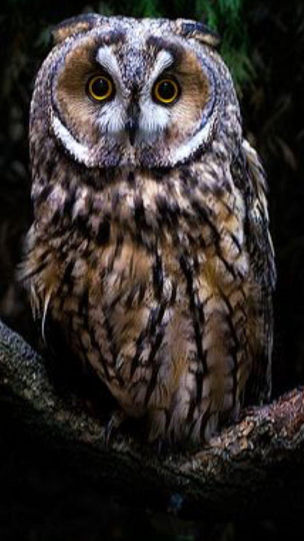 Gorgeous owl!