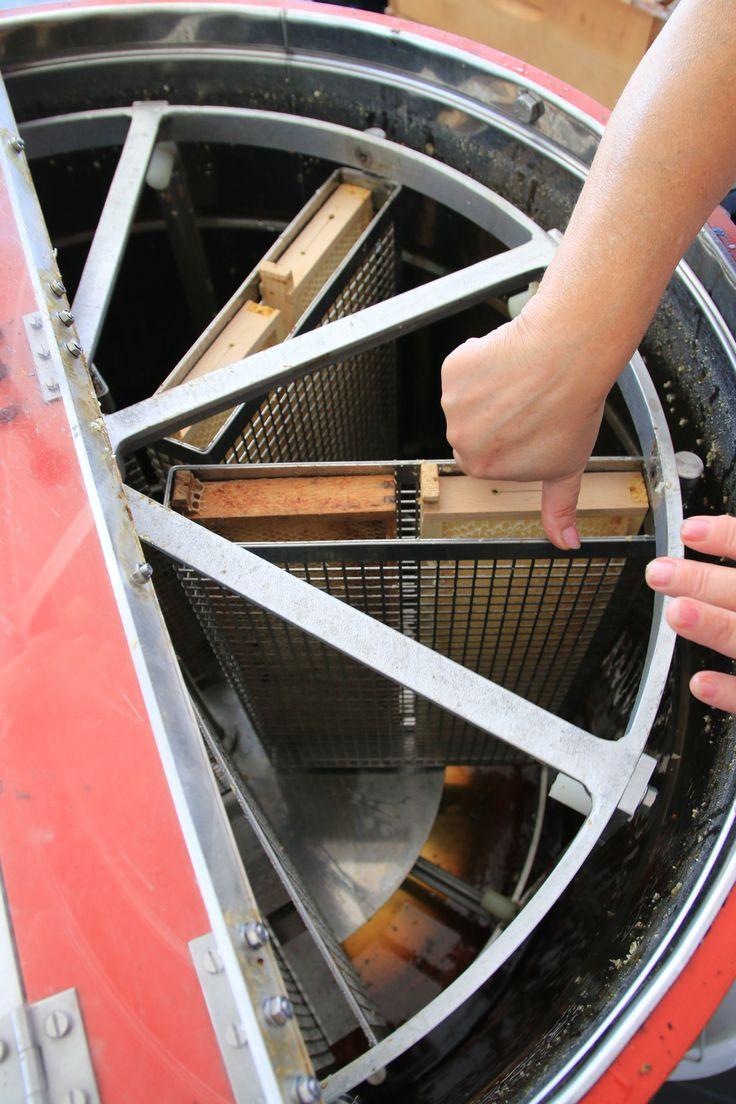Einsetzen der Waben in die Schleudermaschine