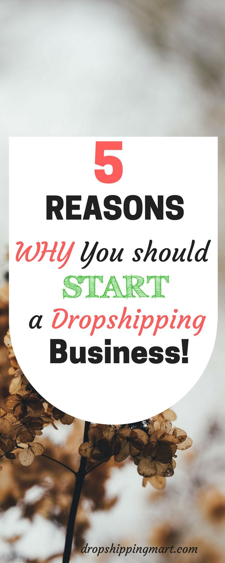 5 Reasons Why Aliexpress its Our Favorite Drop Shipping