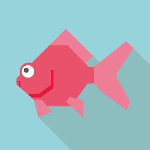 【clorets0506】さんのInstagramをピンしています。 《【金魚】 金魚(英名 : Gold fish)は、フナの突然変異を人為的に選択し、観賞用に交配を重ねた結果生まれた観賞魚。飼育が容易であるため、観賞魚として世界中で親しまれている。 原産地は中国。中国の鮒(チイ)の突然変異種である緋鮒(ヒブナ)を改良したものである。 淡水性で主に藻や水草を食べる。卵生で水中の植物に産卵する。通常30cm程度まで成長する(記録は59cm、体重3kg)。寿命は10年〜15年(ギネス記録は43年、非公式で45年)。生存可能な水温は0度〜41度。品種改良により、さまざまな色・形態の金魚が作り出されている。 #金魚 #キンギョ #goldfish #かわいい #観賞魚 #アクアリウム #直近2つの投稿で #フォロワー減を警戒 #フォロワーの気持ちを繋ぎ止めるためのカワイイ金魚》