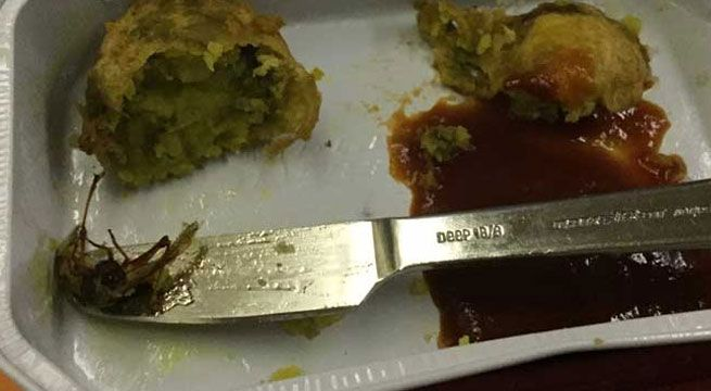 Cockroach Found In Air India Meal   A passenger traveling on an Air India flight to Chicago found a cockroach in the meal served onboard prompting the airline to order a probe into the matter.  Taking a serious note of the incident the carrier has also served notice to the caterer concerned.  The incident happened in the Chicago-bound flight from Hyderabad via New Delhi.  A passenger tweeted about it along with a picture of the meals having a dead cockroach following which Air India…