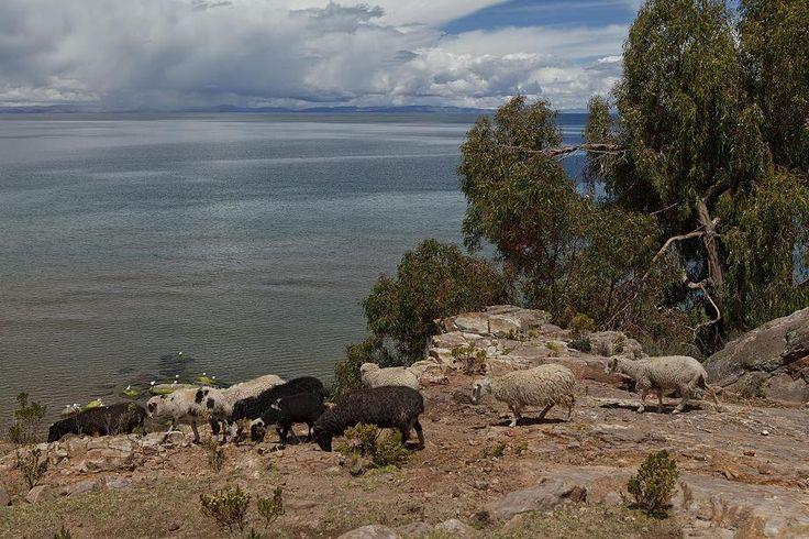 Taquile 2 wurde in Peru, Puno aufgenommen und hat folgende Stichwörter: Peru,  Puno,  Titicaca-See.