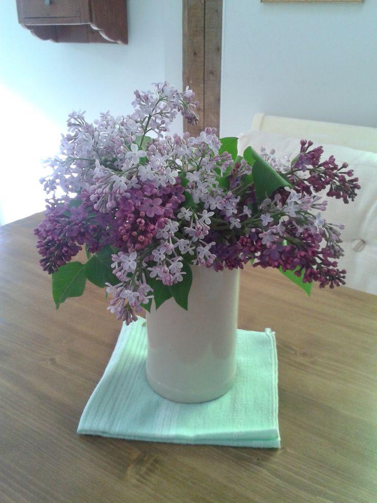Ces merveilles que sont les lilas en fleurs!