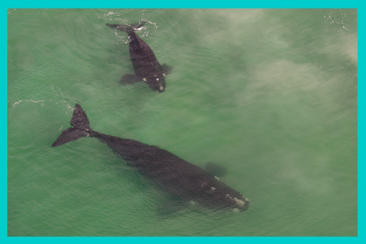 I want to go to De Hoop Nature Reserve and go whale watching
