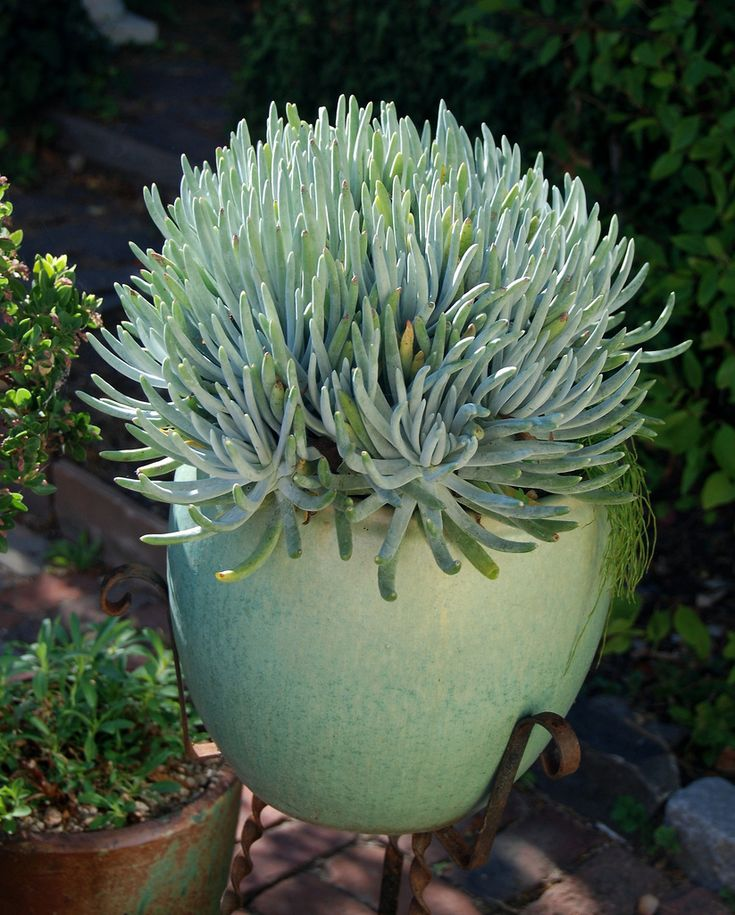 Best Image Of Garden Woodimages Co: 138 Best Images About Hardy Succulents For Sonoma County