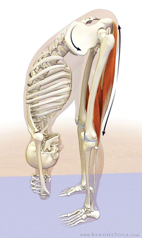 Hamstrings releasing in uttanasana Also releases stress in lower back. Remember to breath! #exercise#running
