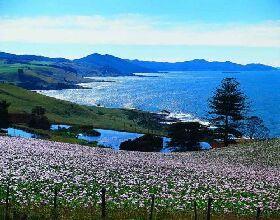 Tasmania :: Rocky Cape National Park