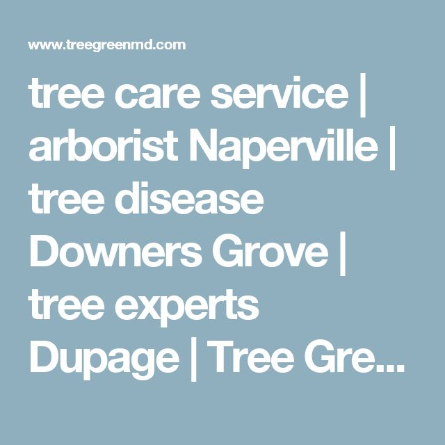 tree care service | arborist Naperville | tree disease Downers Grove | tree experts Dupage | Tree Green