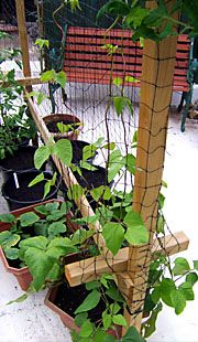 Starting a Garden:  Ideas For Growing Food  In Containers