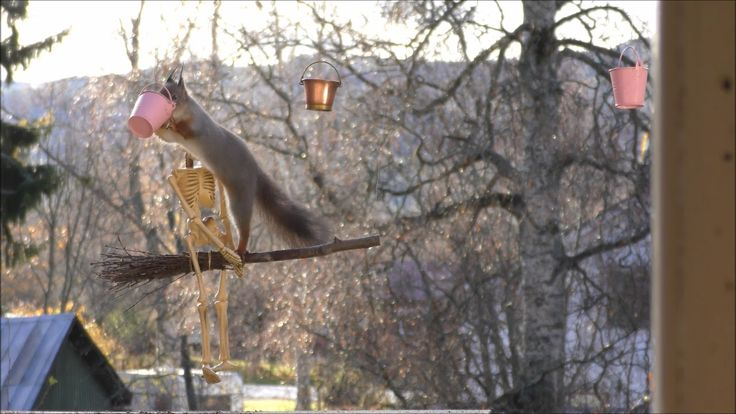 red squirrels on a broom