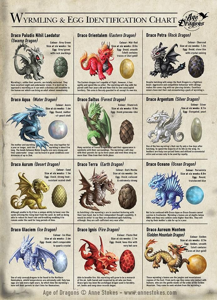 Wyrmling and Egg Identification Chart by Anne Stokes